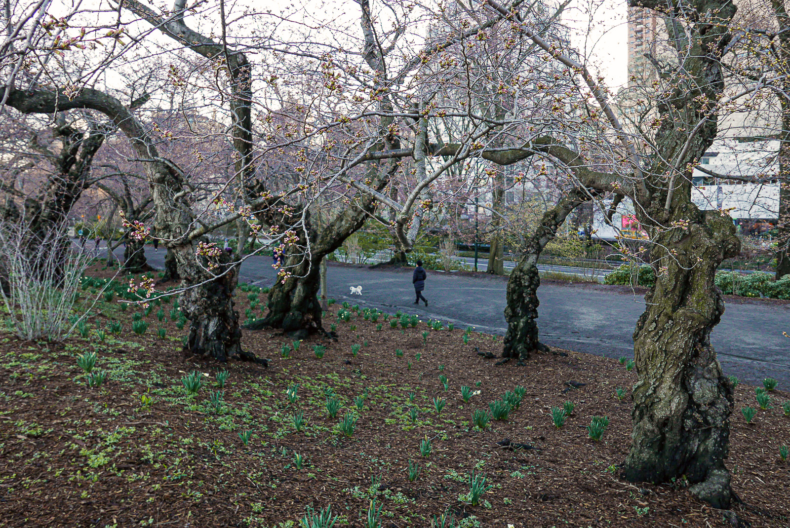 The Bridle Path, Upper East Side, Central Park.